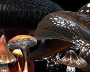 3d Game Fantasy Mushrooms