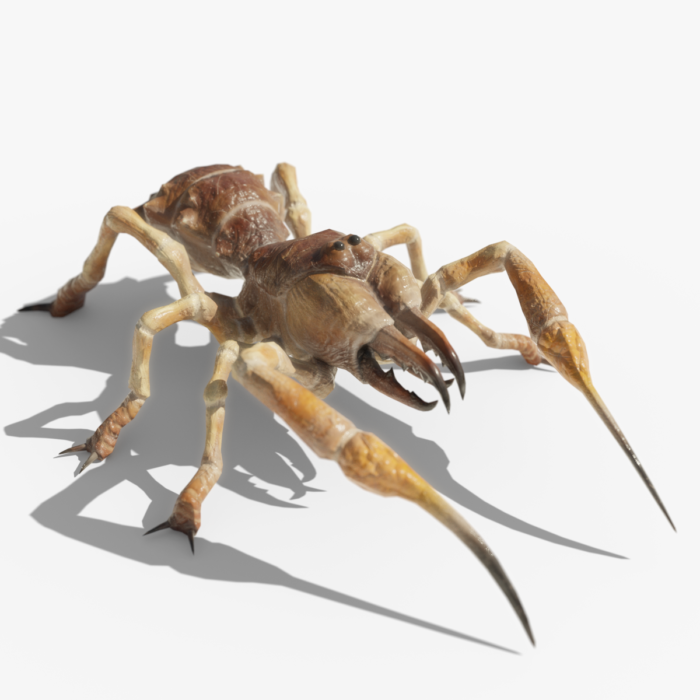Camel spider / Sunspider 3d Model, Rigged and Animated