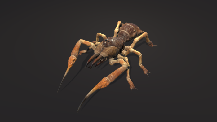 Camel Spider / Sunspider / Solifugae - Screenshot 3