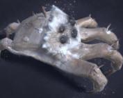 Kranion Soldier - Headgrabber Facehugger Headcrab Digital Painting